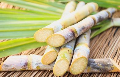 Sugarcane-A-Brief